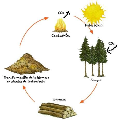20130220122111-ciclo-biomasa.jpg