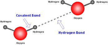 20161018221903-hydrogen-bond.png
