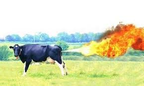 20180122120657-1-22-18-methane-from-cows.png